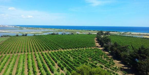 Vue sur les vignobles de l'Ile de Maguelone - Hérault, le Languedoc © Photothèque Hérault Tourisme - C.Gauthier