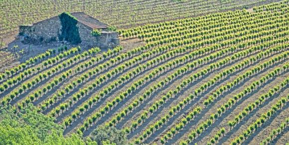 Vignoble de Saint-Chinian - Hérault, le Languedoc © J. DEBRU