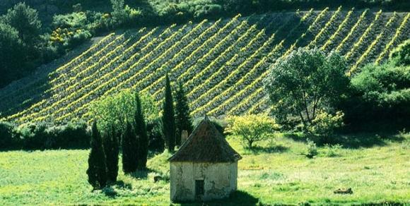 Vignes de Saint-Chinian - Hérault, le Languedoc © Hérault Tourisme